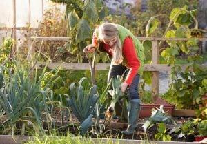 Kleingartenversicherung Test