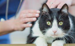 Tierkrankenversicherung Leistung