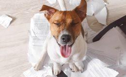 Hundehaftpflichtversicherung Typische Schadensfälle