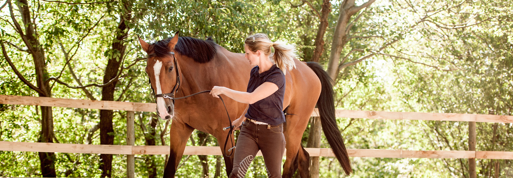 pferdehaftpflichtversicherung test