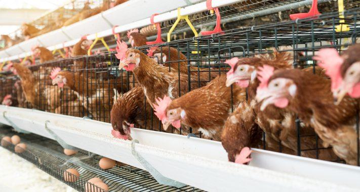 Versicherungsfall Rückrufaktion: Fipronil-Eier in ganz Deutschland vermutet