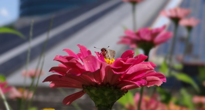 Mit Garten und Balkon gegen das Insektensterben