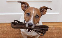 Hundehaftpflichtversicherung sinnvoll?