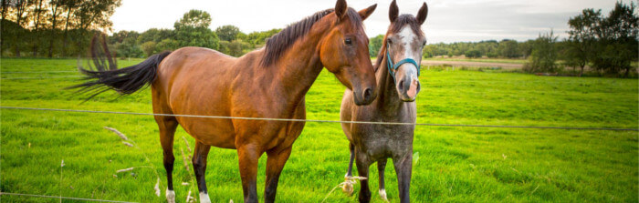 Pferd deckt frau