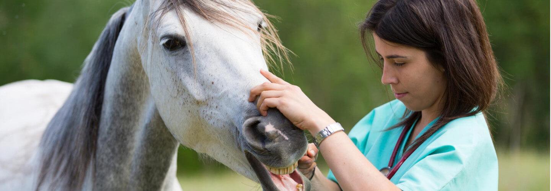 Tierkrankenversicherung Pferd