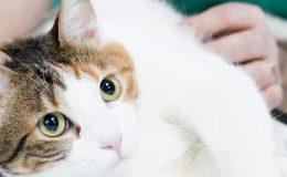 OP-Versicherung für Katzen