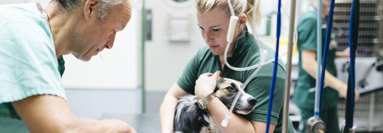 OP-Versicherung für Hunde