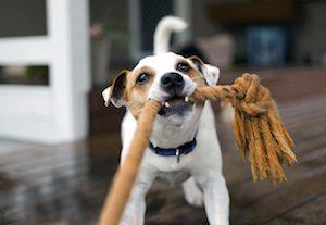 Hundehaftpflichtversicherung im Test 2019