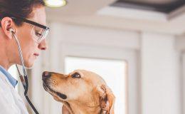 Hundehaftpflichtversicherung Hundekrankenversicherung Kombination