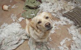 hundehaftpflichtversicherung eigenschäden