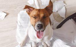 hundehaftpflichtversicherung mietsachschäden