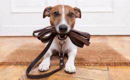 Hund-anmelden-versichern-versteuern